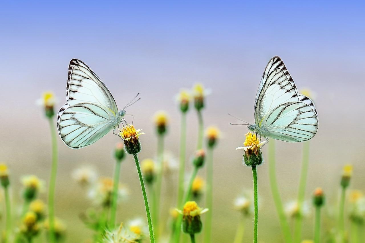 butterfly-1127666_1280.jpg